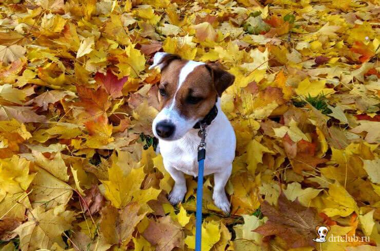 Осенний Джек
