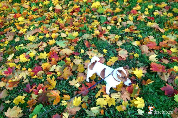 Джек и листья