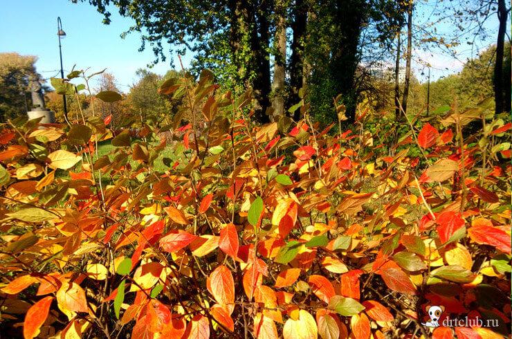 Пылающие листья