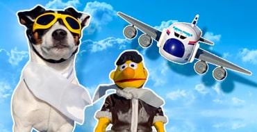 С собакой в самолёте