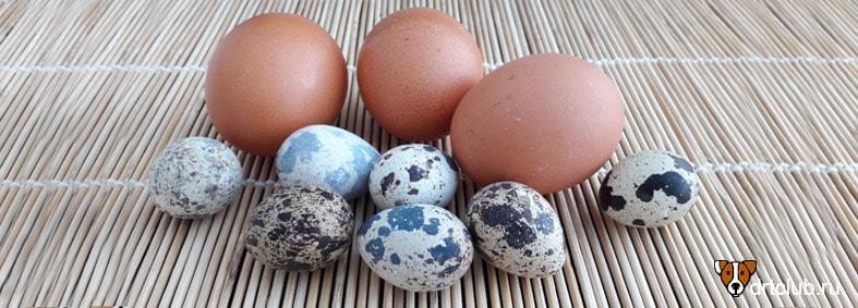 Яйца для собаки
