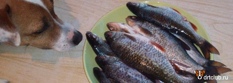 Рыба для собаки