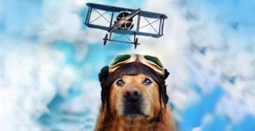 Летим с собакой
