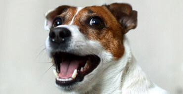 Чистить собаке зубы