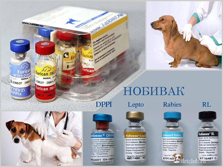 куда делать прививку собаке нобивак