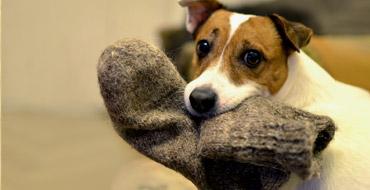 Cодержания собак в квартире