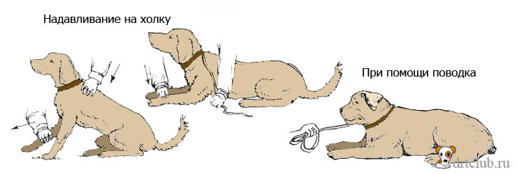 Обучить собаку командам