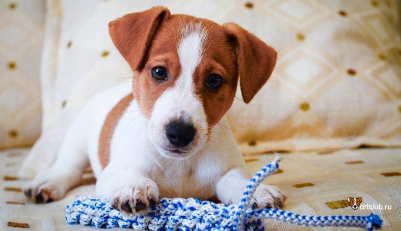 Схема кормления щенка