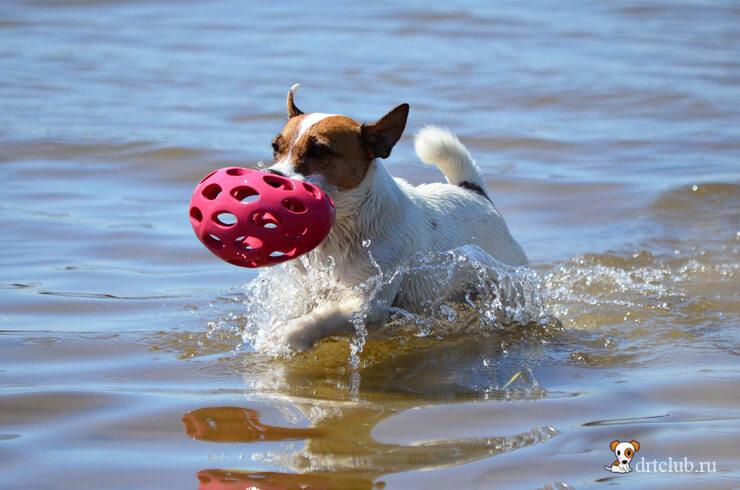 Мой любимый шарик