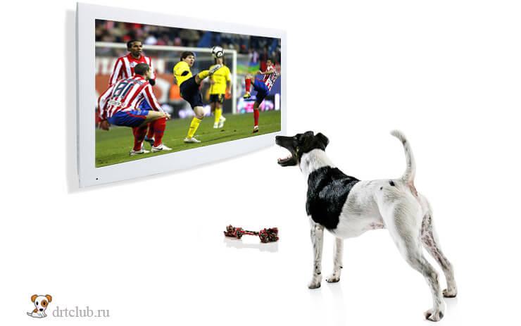 Смотрит телевизор