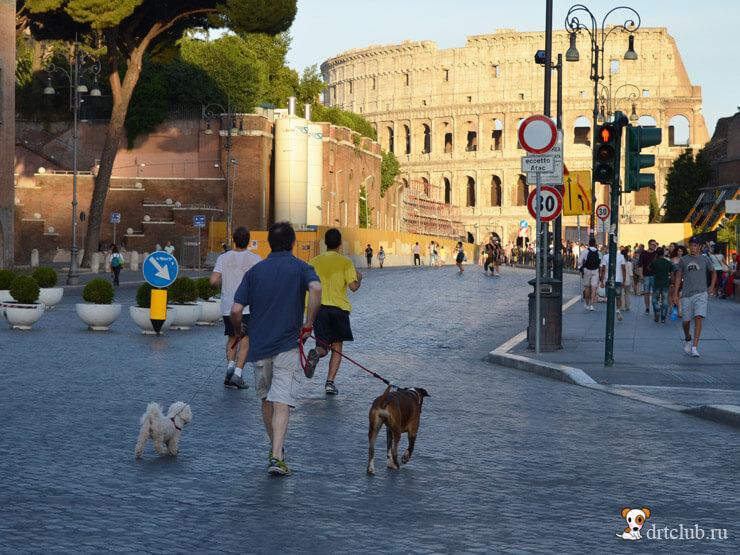 Фото итальянских собак