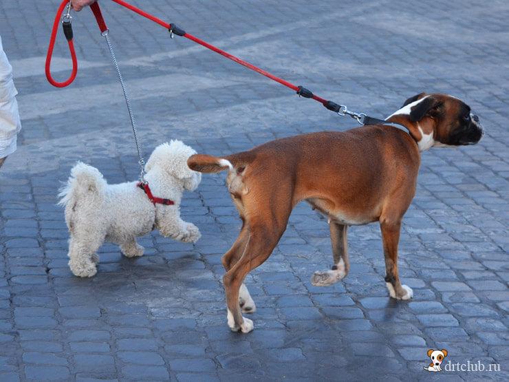 Собаки Рима