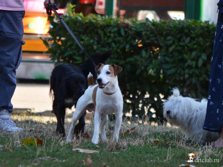 Собачьи встречи