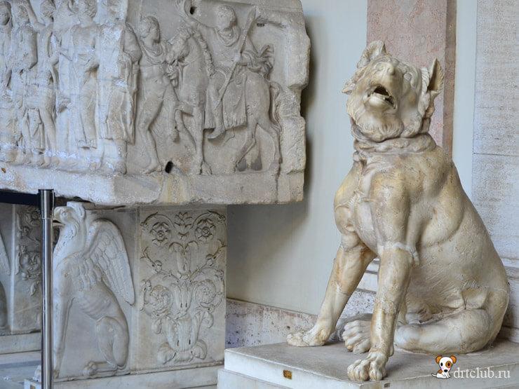 Собаки в Ватикане