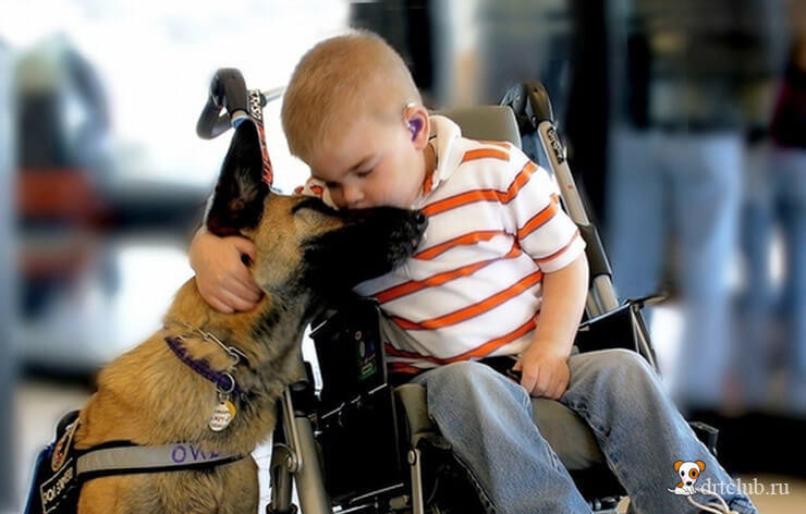 Собаки диагносты и помощники