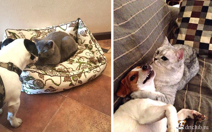 Ладят ли кошки и собаки