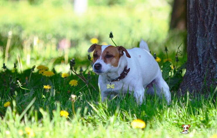 У собаки понос – что делать и как помочь питомцу?