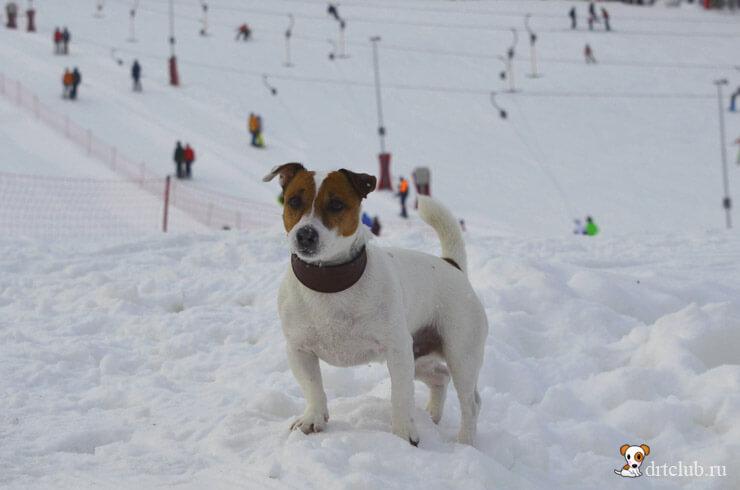 Снежный Джек