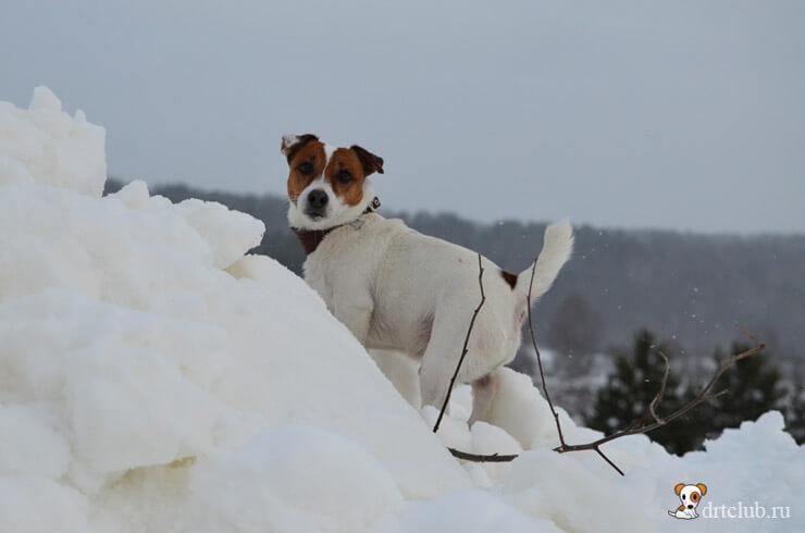 Снежный красавчик