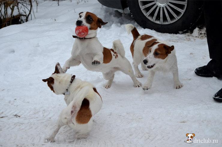 Джеки на Снежном