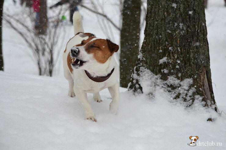 Ловим снежинки