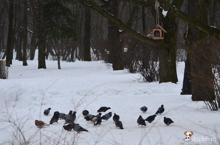 Птички и крошки