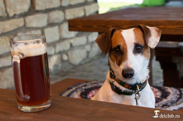 Ошибки при кормлении собаки