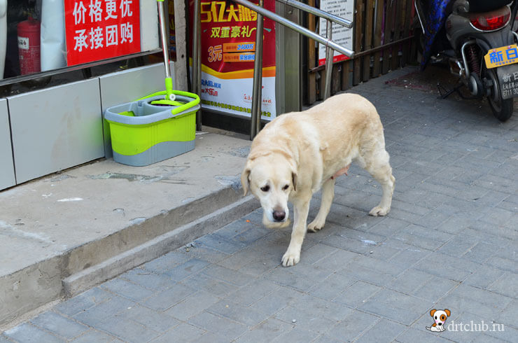 Собаки на улицах