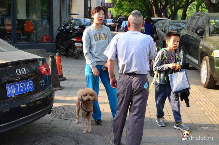 Собаки на улицах Пекина