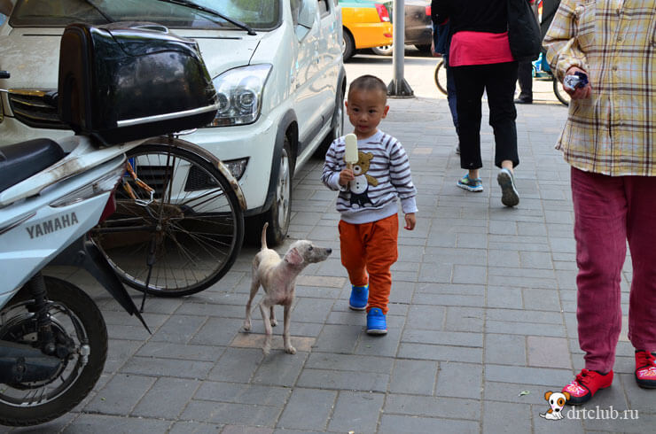 Собачка просит мороженое