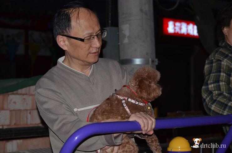 Китайцы любят собак