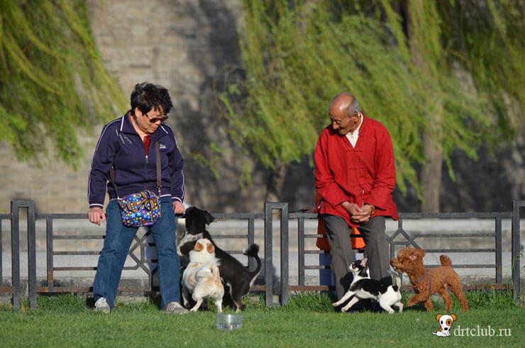 Собаки у города