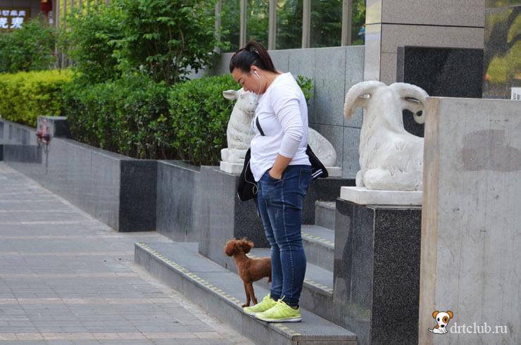 Китайская девушка с собачкой