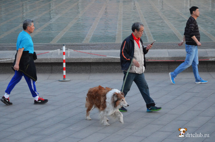 Собаки гуляют вечером