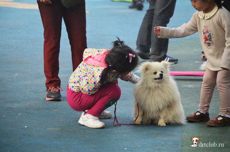 Китайская девочка с собачкой