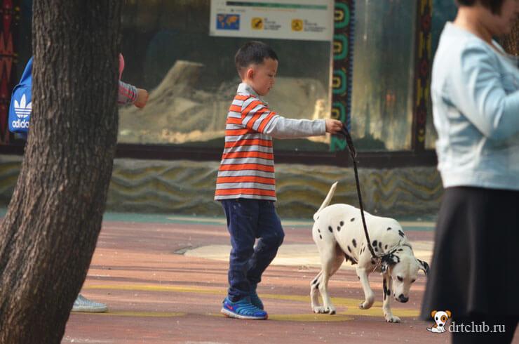 Мальчик с далматинцем