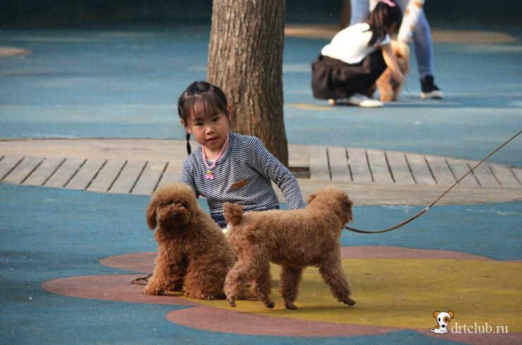 Дети любят собак