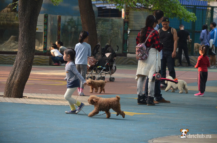 Девочка бегает с собачкой
