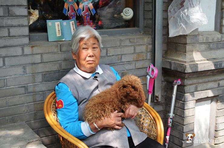 Бабушка и пудель
