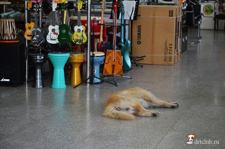 Собачка в магазине