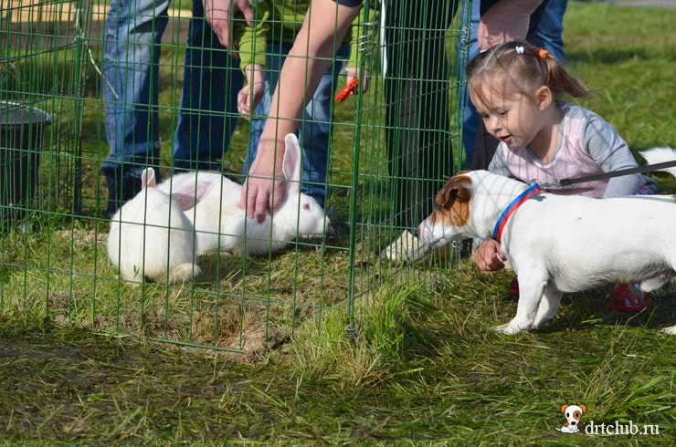 Кролики заинтересовали