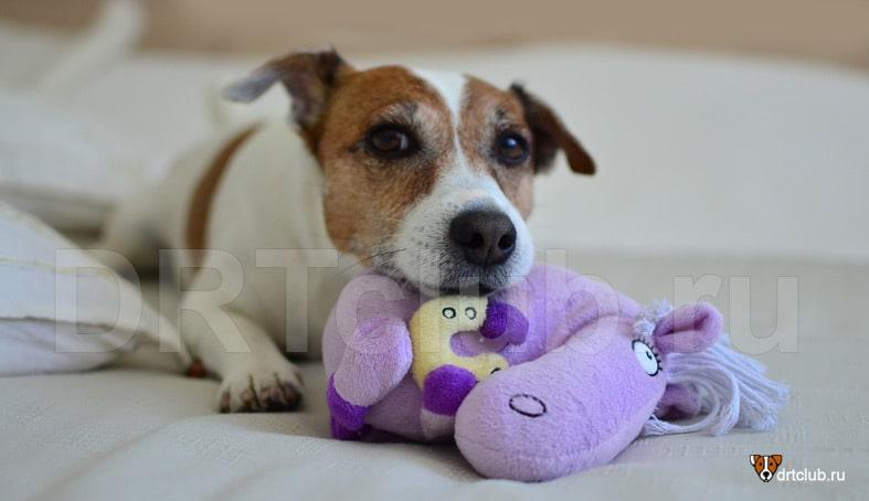 У щенка сухой нос норма или патология