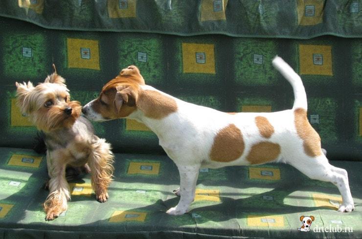 Маленький щеночек