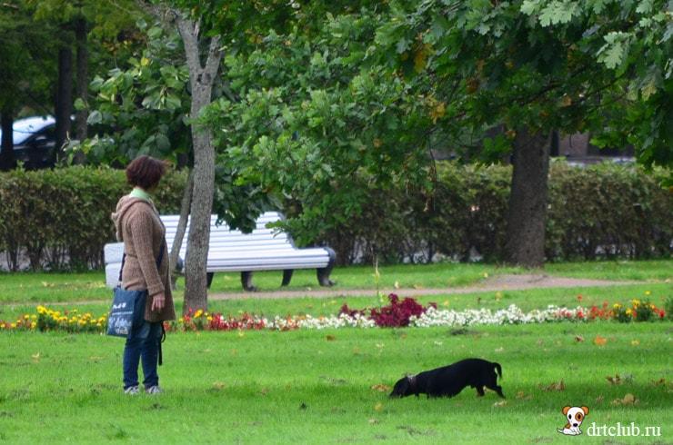 В парках и скверах