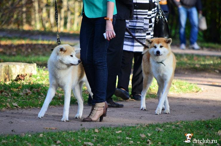 Собаки Пушкина