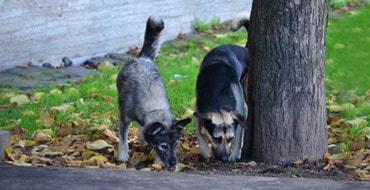 Собачки маленького городка