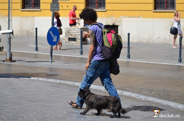 Венгерские бездомные