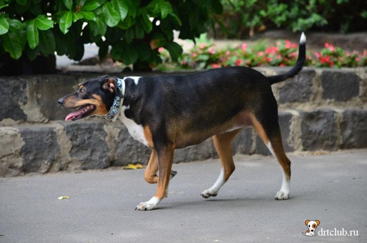 Собачка с хвостиком