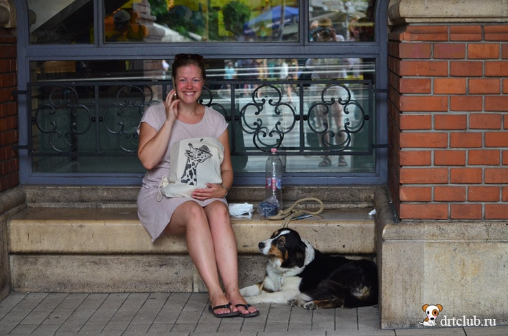 Собаки Венгрии