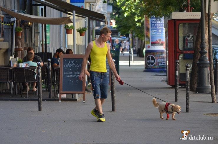 Венгры и собаки
